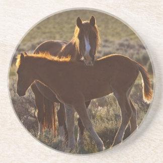 Feral Horse Equus caballus) adult and colt in Coaster