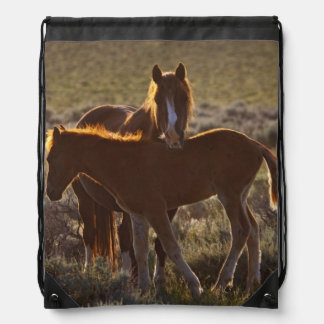 Feral Horse Equus caballus) adult and colt in Drawstring Bag