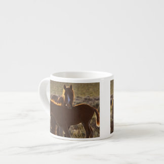 Feral Horse Equus caballus) adult and colt in Espresso Cup