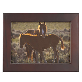 Feral Horse Equus caballus) adult and colt in Keepsake Box