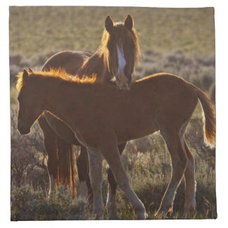 Feral Horse Equus caballus) adult and colt in Napkin