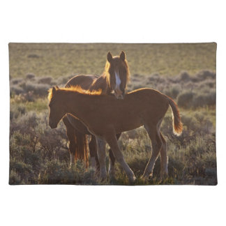 Feral Horse Equus caballus) adult and colt in Placemat