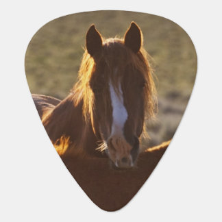 Feral Horse Equus caballus) adult and colt in Plectrum