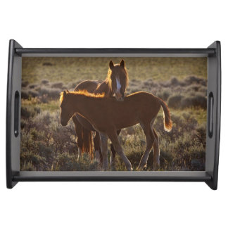 Feral Horse Equus caballus) adult and colt in Serving Tray