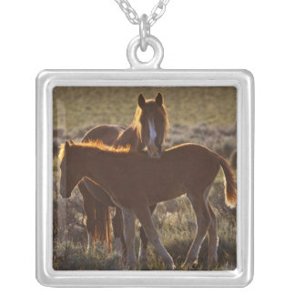 Feral Horse Equus caballus) adult and colt in Silver Plated Necklace