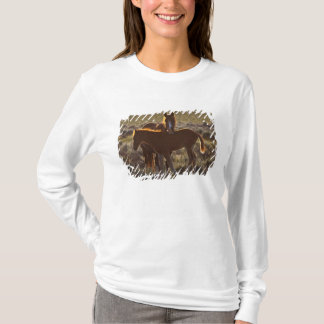 Feral Horse Equus caballus) adult and colt in T-Shirt