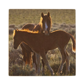 Feral Horse Equus caballus) adult and colt in Wood Coaster
