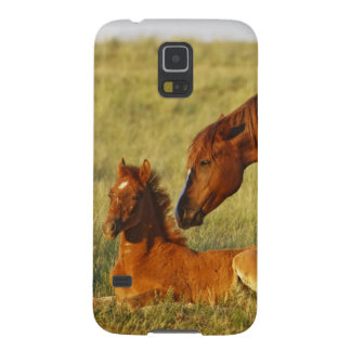Feral Horse Equus caballus) adult smelling Cases For Galaxy S5