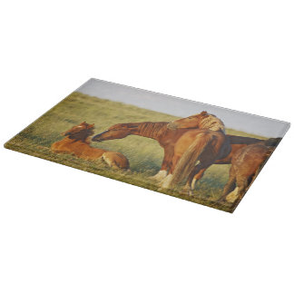 Feral Horse Equus caballus) adult smelling Cutting Board