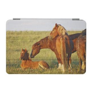 Feral Horse Equus caballus) adult smelling iPad Mini Cover