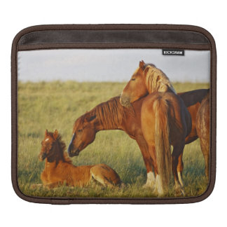Feral Horse Equus caballus) adult smelling iPad Sleeve