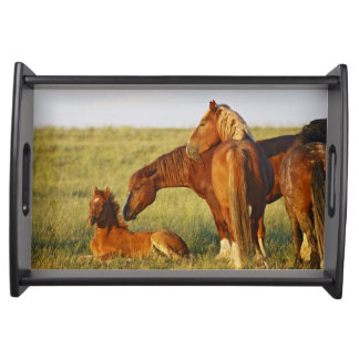 Feral Horse Equus caballus) adult smelling Serving Tray