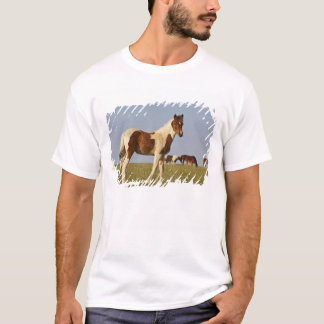 Feral Horse Equus caballus) colt with herd in T-Shirt