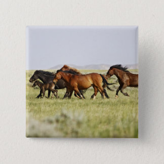 Feral Horse Equus caballus) herd of wild 15 Cm Square Badge
