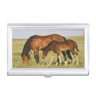 Feral Horse Equus caballus) wild horse mother Business Card Holder