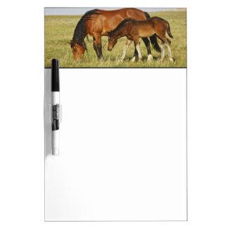 Feral Horse Equus caballus) wild horse mother Dry Erase Board