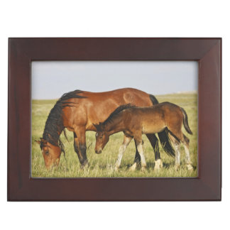 Feral Horse Equus caballus) wild horse mother Keepsake Box