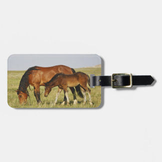 Feral Horse Equus caballus) wild horse mother Luggage Tag