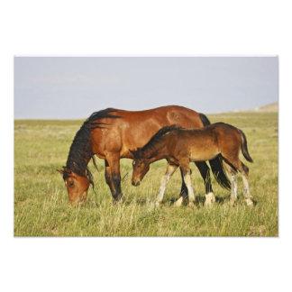Feral Horse Equus caballus) wild horse mother Photo Print