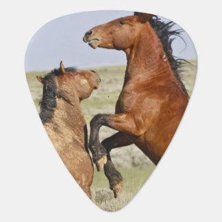 Feral Horse Equus caballus) wild horses 2 Plectrum