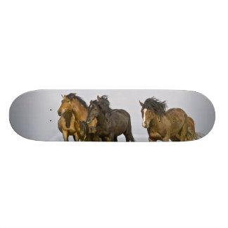 Feral Horse Equus caballus) wild horses 3 19.7 Cm Skateboard Deck