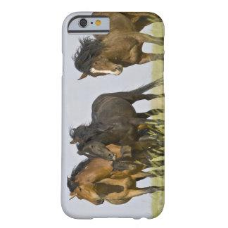 Feral Horse Equus caballus) wild horses 3 Barely There iPhone 6 Case
