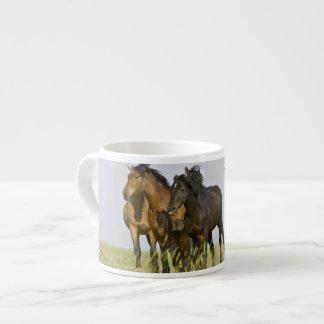 Feral Horse Equus caballus) wild horses 3 Espresso Cup