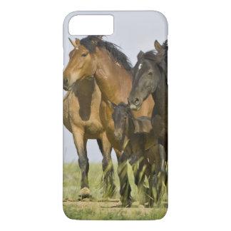 Feral Horse Equus caballus) wild horses 3 iPhone 8 Plus/7 Plus Case