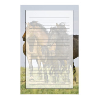 Feral Horse Equus caballus) wild horses 3 Stationery