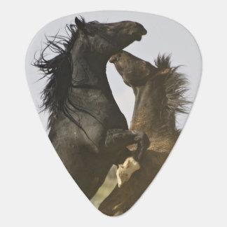 Feral Horse Equus caballus) wild horses Plectrum