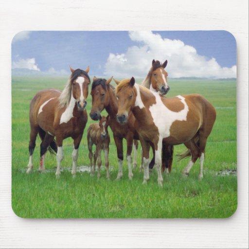 Feral horses, Assateague Island Nat. Seashore Mouse Pads
