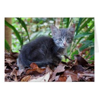 Feral Kitten Card