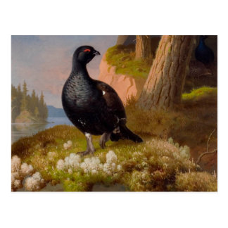 Ferdinand von Wright Black grouses CC0065 Postcard