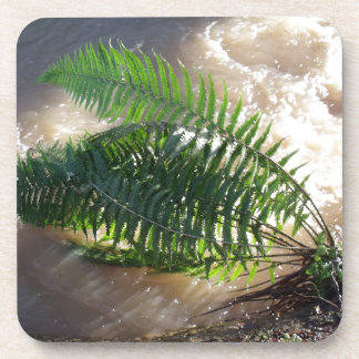 Fern And Flood Beverage Coasters