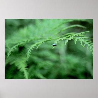 Fern Bug Poster