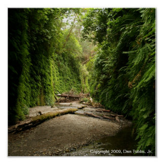 Fern Canyon, California Poster