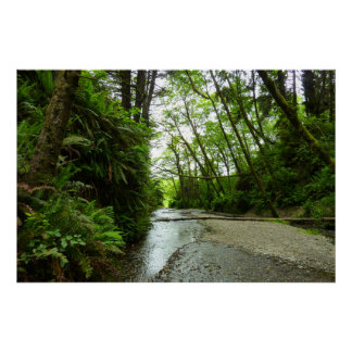 Fern Canyon II at Redwood National Park Poster