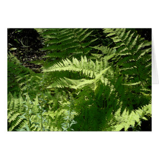 Fern Flurry Card