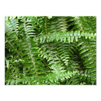 Fern Fronds I Green Nature Photographic Print