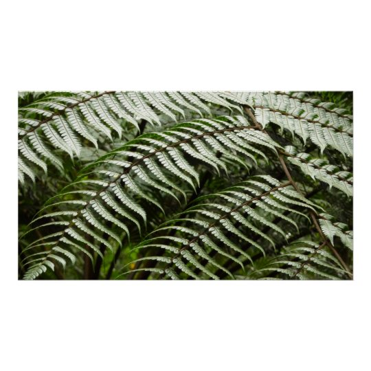 Fern Fronds II Dark Green Nature Poster