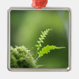 fern in rain forest clsoe up christmas ornament