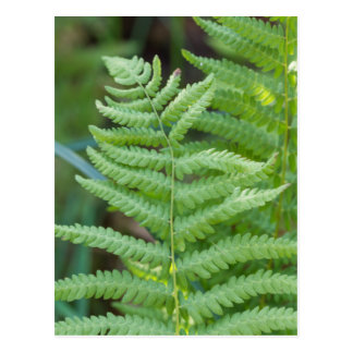 fern in the forest postcard