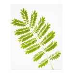 Fern leaves flyer