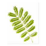 Fern leaves isolated post cards