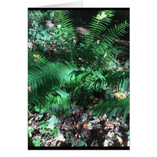 fern photo image greeting card