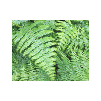 Fern plant for the office/Office Canvas Print