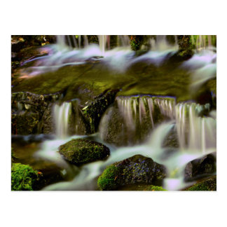 Fern Spring, Yosemite National Park, California Postcard