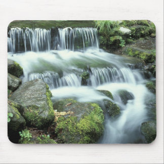 Fern Spring, Yosemite National Park Mouse Pad