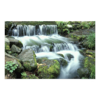 Fern Spring, Yosemite National Park Photo Print