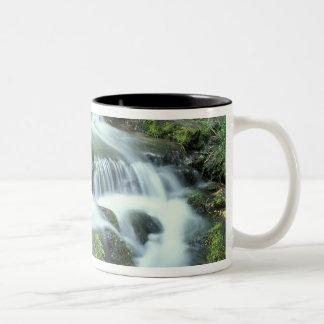 Fern Spring, Yosemite National Park Two-Tone Coffee Mug